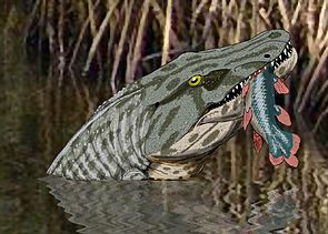 Megalocephalus hat einen Quastenflosser gefangen