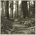 Military road on Beacon Hill, Seattle, circa 1900 (MOHAI 9883).jpg
