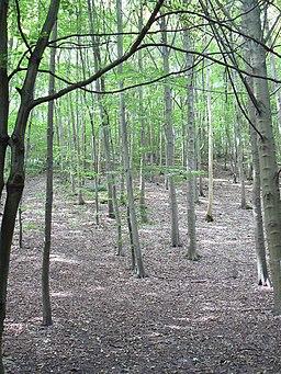 Millington Wood - geograph.org.uk - 555653