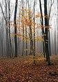Mistična šuma.jpg