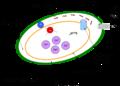 Mitocondrio alterazione flusso protonico.png
