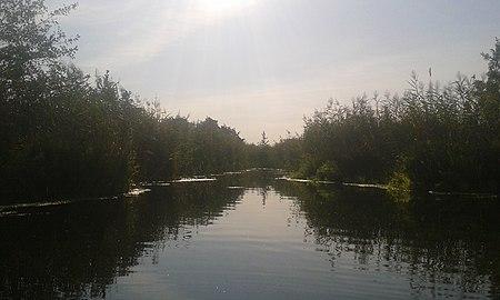 Mittag im Fließ Parsteiner See im Biosphärenreservat Schorfheide-Chorin.jpg