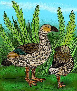 Moa-nalo - Artist's conception of Thambetochen chauliodous, and Ptaiochen pau