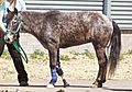 Molly the Pony.jpg