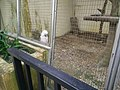 More more feathery animals Bird Park KL.jpg
