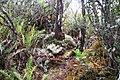 Mount Kemiri (8187817161).jpg