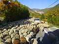 Mouton sur la route de Entrevaux a Annot 0566.JPG