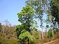 Mudumalai Tiger Reserve - panoramio (23).jpg