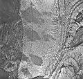 Muir Glacier, tidewater glacier terminus, August 26, 1968 (GLACIERS 5709).jpg