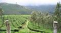 Munnar - views from Munnar (23).jpg
