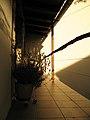"""My """"gank"""" in the evening sun (2753620699).jpg"""