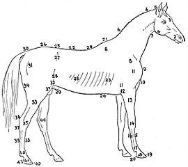 File:NIE 1905 Horse - external anatomy.jpg - Wikimedia Commons