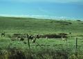 NRCSMT01088 - Montana (5023)(NRCS Photo Gallery).tif