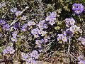NTS - Wild Flowers 036.jpg