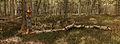 Nationaal Park Drents-Friese Wold. Locatie Dieverzand. Dode boom, belangrijke voedselbron in evenwichtig biotoop 07.jpg