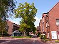 Naturdenkmal 3-2, Eiche vor dem neuen Rathaus, Bild 3.JPG