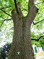 Naturdenkmal im Landkreis Straubing-Bogen.jpg