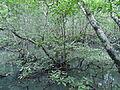 Nature of Langkawi (5).JPG
