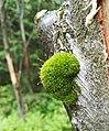 Nature of Stog Izerski (1).jpg