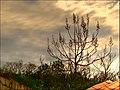 Natureza - HDR (2704478497).jpg