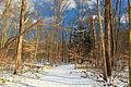 Nescopeck State Park Hardwood Zone (3).jpg