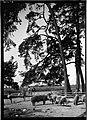 Neureut Schweineweide Landesarchiv Baden-Wuerttemberg Generallandesarchiv Karlsruhe 498-1 Nr. 6229 Bild 1 (4-1083983-1).jpg