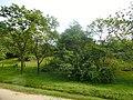 New Town, Polonnaruwa, Sri Lanka - panoramio (13).jpg