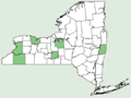 Nicotiana rustica NY-dist-map.png