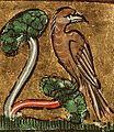 Nightingale, circa 1350..jpg