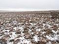 North Grains (2) - geograph.org.uk - 683212.jpg