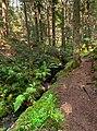 North path into Gullmarsskogen ravine.jpg