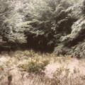 O segredo da floresta.png