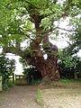Oak tree - geograph.org.uk - 188867.jpg