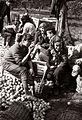 Obiranje jabolk na Srednji kmetijski šoli Maribor 1958.jpg
