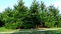Ogród Botaniczny w Myślęcinku, Bydgoszcz, Polska - panoramio (186).jpg