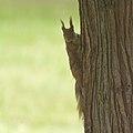On a tree (35278143866).jpg