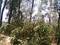 Ooty landscape 6.jpg