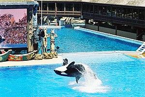 """Orca """"Killer Whale"""" in US amusement park"""