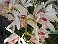 Orchid Flower.JPG
