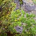 Oregon Garden mossy boulder 2007-12-23 15-23-21 0070.jpeg