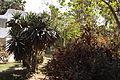 Orman garden - Cairo By Hatem Moushir 9.jpg