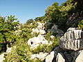 Oromediterranean Sibljak Lonicero-Rhamnion Fuk. leg Pavle Cikovac Mt Orjen, Velje Leto.JPG
