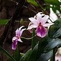 Orquídeas próximas à estufa.jpg