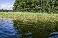 Ota ezers-krasts ar niedrēm - panoramio.jpg