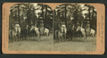 Our party, Yosemite Valley, Cal, from Robert N. Dennis collection of stereoscopic views.png