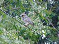 Owl looking for hunt.jpg