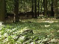 Přírodní park Škvorecká obora-Králičina - lesy východně od sídliště Rohožník a severně od Květnické studánky (7).JPG