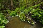Přírodní rezervace Kavinský potok (02).jpg