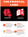 PSY1010 Brain Infographic mtaylor.png