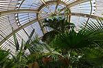 Palm house - Kew Gardens.JPG